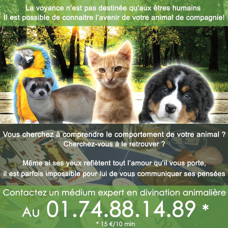 animaux-2